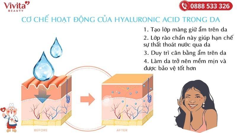 cơ chế hoạt động của hyaluronic acid trong da